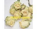 Cream Rose Heads