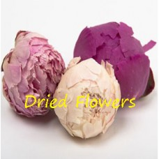 Dried Peony  Heads - Pack of 50