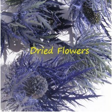 Thistle Heads - Pack of 10